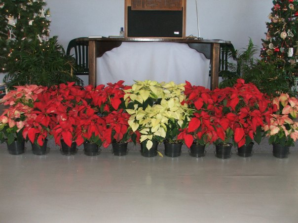 Still time to get your poinsettia.